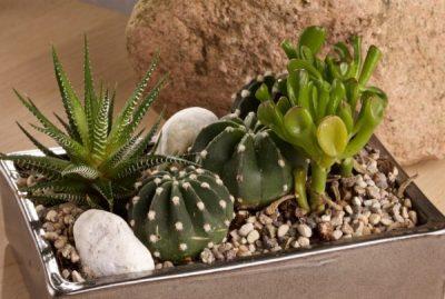 Collezione e composizione di piante grasse