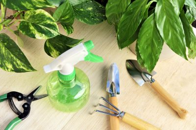Gardening tools and houseplants – still life