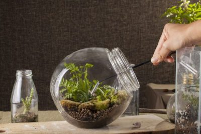 Terrarium, a hand with a tweezer making of bottle terrarium plant green house